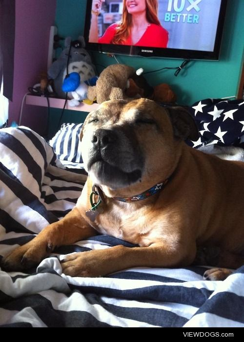 This is my staffy Roxy mid-yawn, this photo makes me laughed . I…