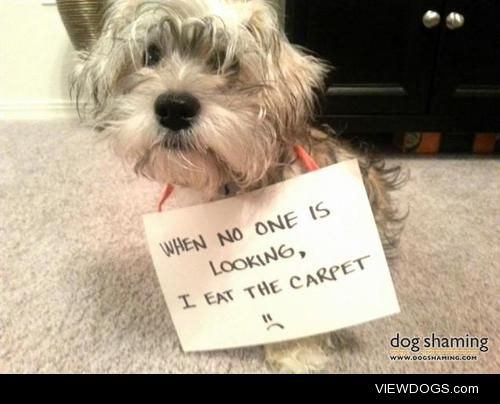 What did this adorable 'rug-amuffin do?  When no one is…