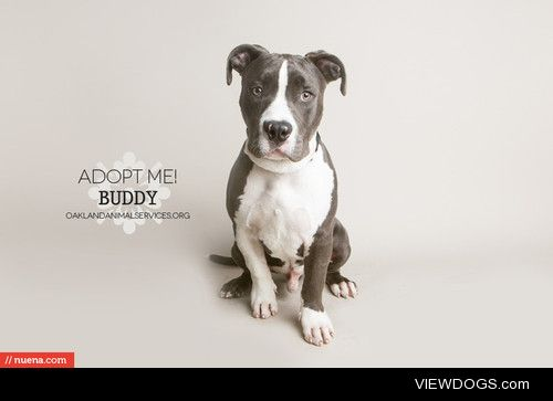 Adoptable dogs from Oakland Animal Services in Oakland, CA….