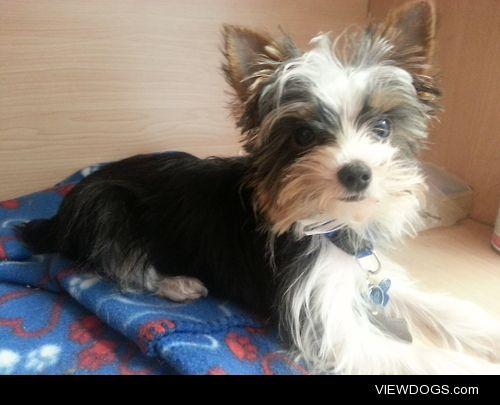 Meet Teddy (: