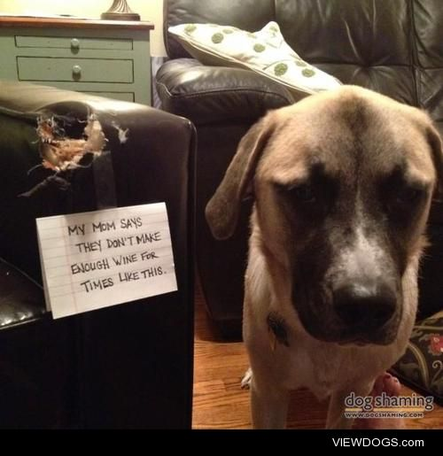 This is why my mom drinkswine  Left out of his crate, one…