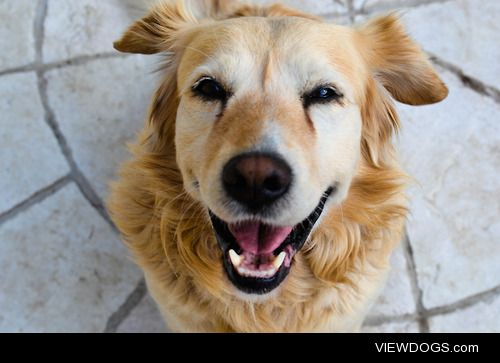 egnesz:  The happiest dog ever. :)