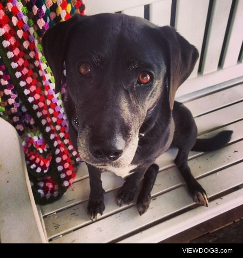 Coco is a 6 year old lab/kelpie who still thinks she is a puppy!…