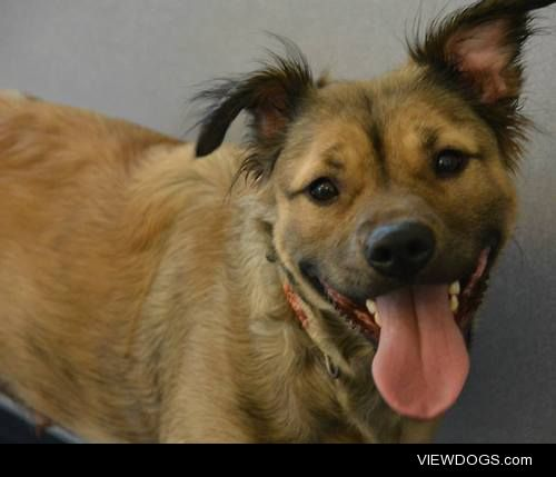 This is Elana. She's up for adoption at the New Hampshire Humane…