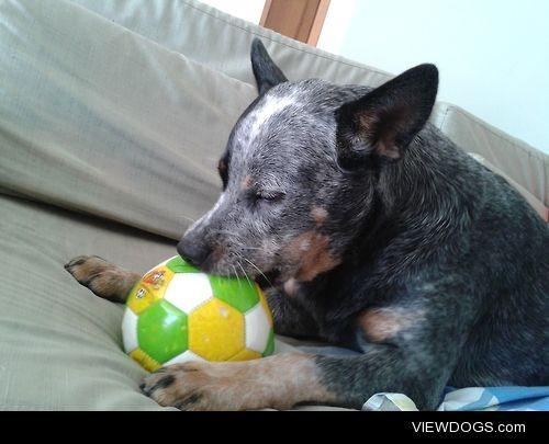 """""""Guri"""" preparing for the World Cup. Hunger Ball."""