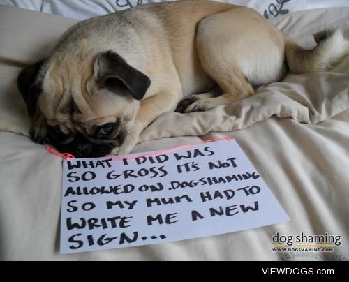 A Very NaughtyPug!  What I did was SO gross it's not…