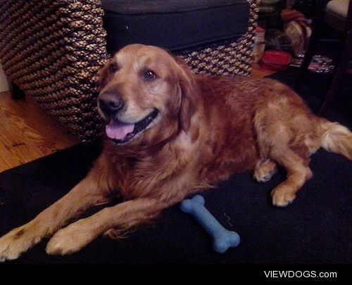 This is my Golden retriever Sammy he had 7 year and he make my…