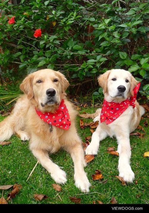 Riley & cooper wearing their new bandanas.