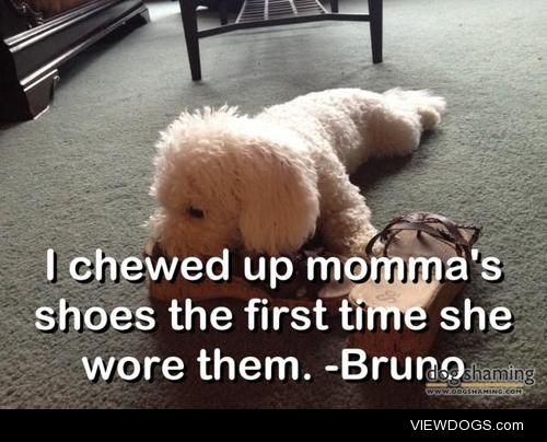 """Bru-NO!  """"I chewed up momma's shoes the first time she…"""