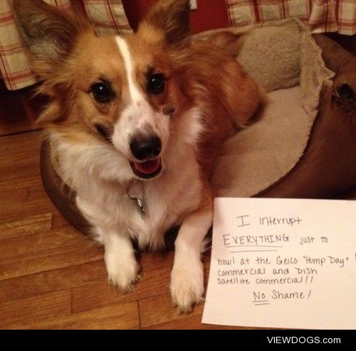 Hump Day!!  Our corgi howls at the television any time the Geico…