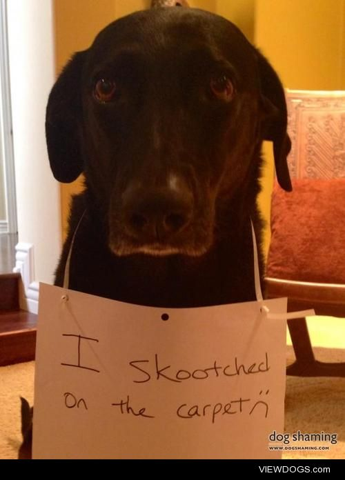 Don't you wish you'd 'skootch-guarded thecarpet?  Today I…