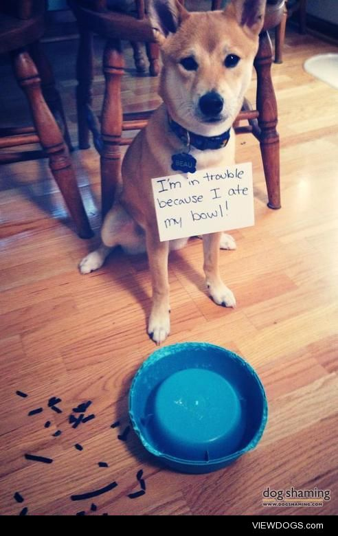 Such Shame. Much Bowl.Wow.  I thought I'd leave…