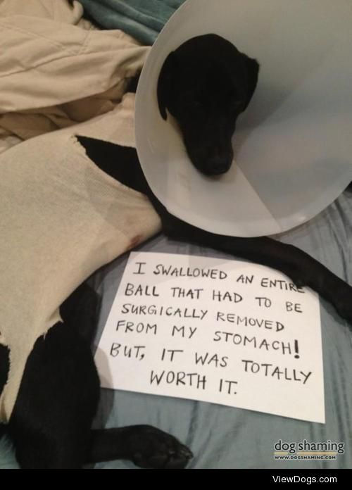 It was totally worthit…  I stole another puppy's ball at…