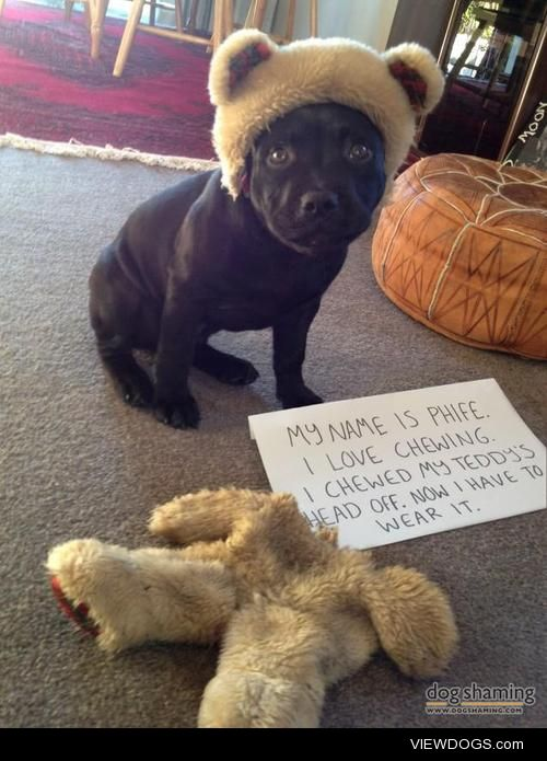 Bear-dog  This is Phife Dog. He's an 11 week old English…