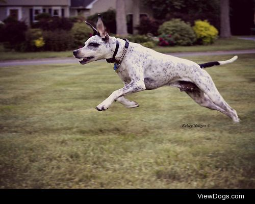My rescue dog, Ruger, chasing moths outside! He's a…