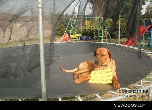 Mambo is why the kids can't use thetrampoline  Mambo, my…