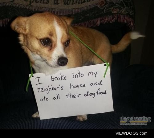 Small dog, bigapetite  My neighbour allows my two dogs to…