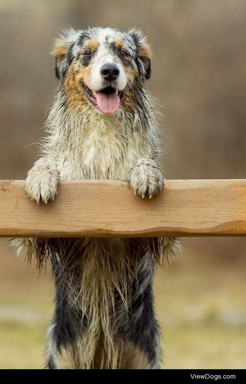 Dirty dog = Happy dog / / Erdik Slabotka