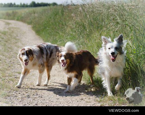 Coco, Balou & Kaya – Best Trio! more pictures:…