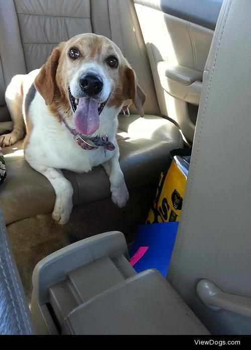 My sweet boy, Whiskey on his way to our furever home! Happy 1…
