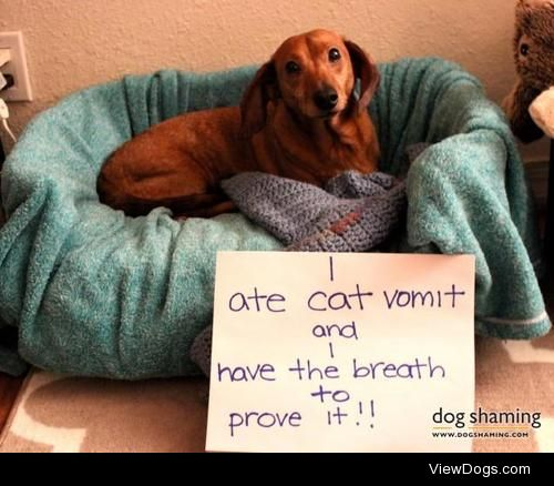 Barf Breath!  Gussie ate our cat Tino's vomit and was…