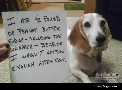 """Oh Fudge!  Is it really """"shaming"""" if she clearly…"""