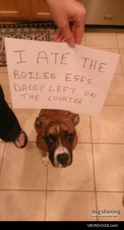 Eggcellent idea!  I left the kitchen for 15 seconds and Reesee…