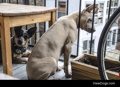 my Dogs watching / / sebastien haslé