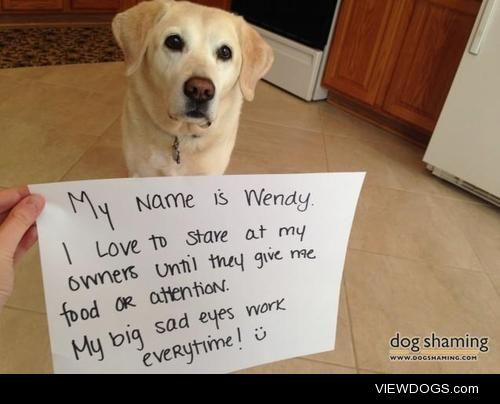 Hungry Eyes  My Name is Wendy. I love to stare at my owners…
