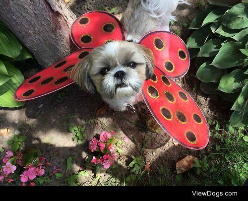 My little Bug <3