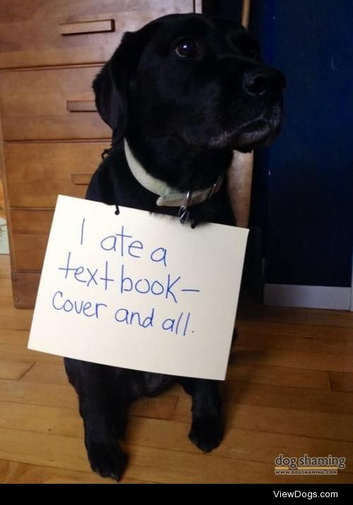 """Textbook dog behaviour – so much forFinals!  """"I ate a textbook…"""