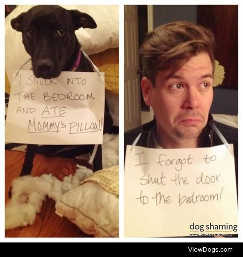Double the shame  Dog: I snuck into the bedroom and ATE…