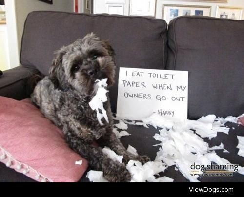 I was trying to replace the empty roll foryou!  Harry only eats…