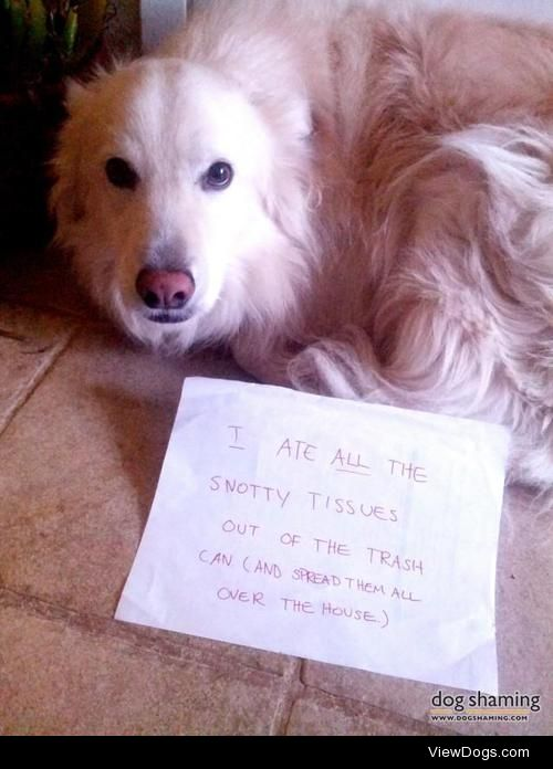 Bad to theBoone  Every flu/cold season, my dog faces his…