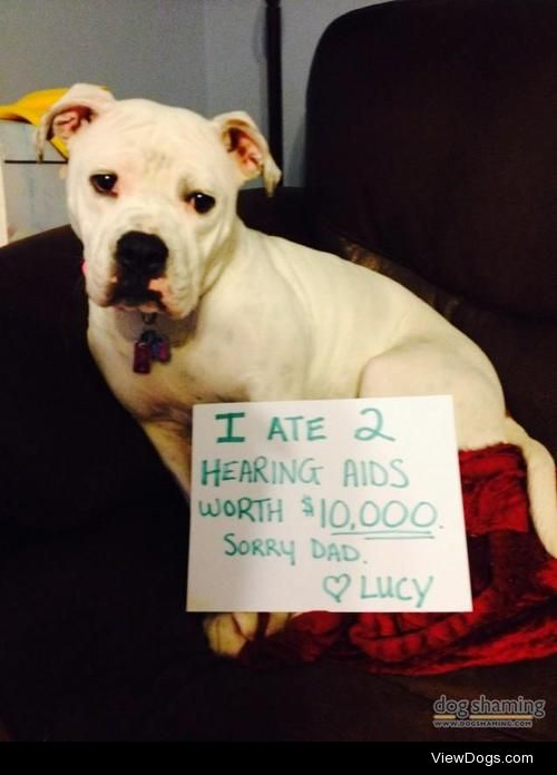 The $10,000 meal  Lucy decided that her dad's hearing aids…