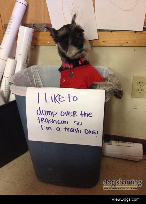 Trash Dog  I like to dump over the trash can so I'm a…