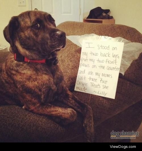 Well, you called it a treat, I KNOW WHAT THATMEANS!  My dog at…