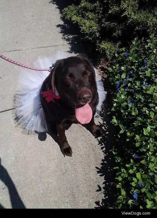 My girl, Zoe, on her 10th birthday, sporting her favorite tutu….
