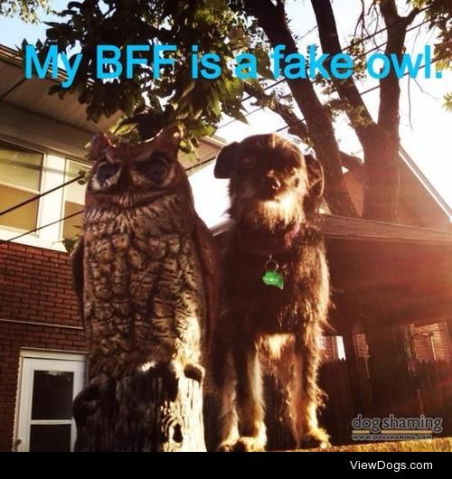 Love is blind  Mavis loves the fake owl in our backyard. They…