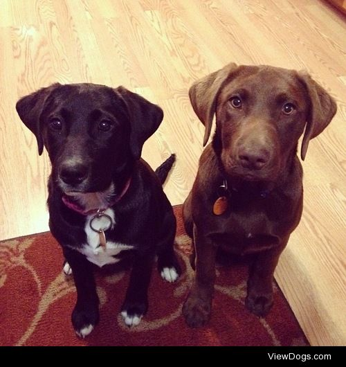 """In honor of National Dog Day these are my sister's """"mutts"""" they…"""
