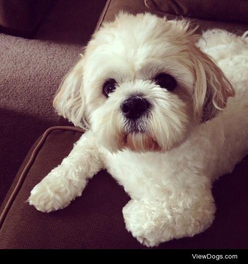 Meet, Dexter, my handsome dog.
