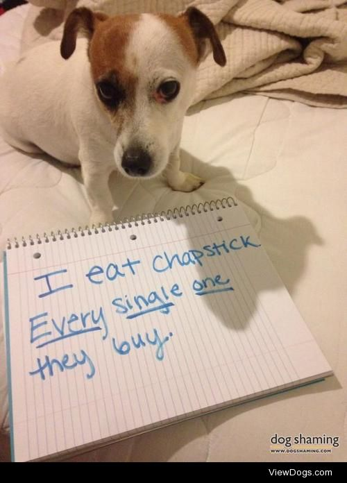 Jack Chap  Lillian is a typical Jack Russell who loves to get…