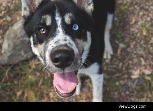 emilyrosehawkins:  I love this pup By: Emily Hawkins