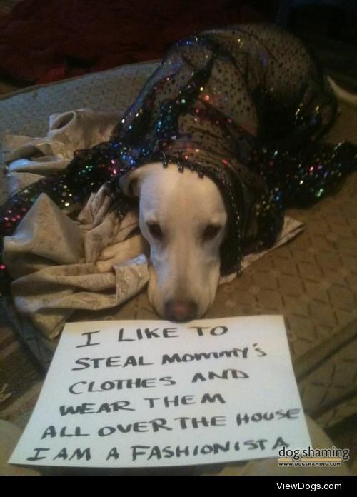 Your style is for thedogs…  Oliver likes to go through my…