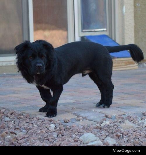 Wrigley – mixed breed rescue  Las Vegas