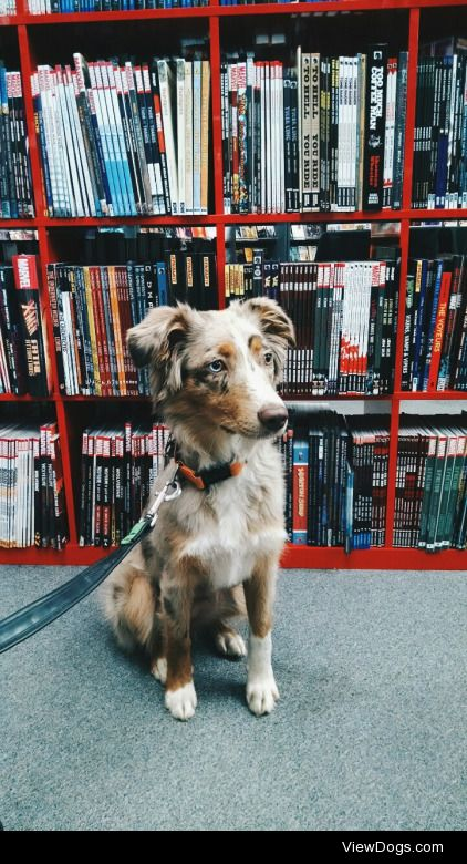 canismirabilis:  Mesa got to visit the local comics shop, Things…