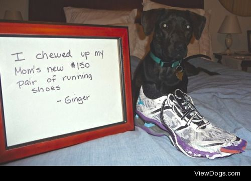 How dare you go running without me?  Bought a new pair of very…