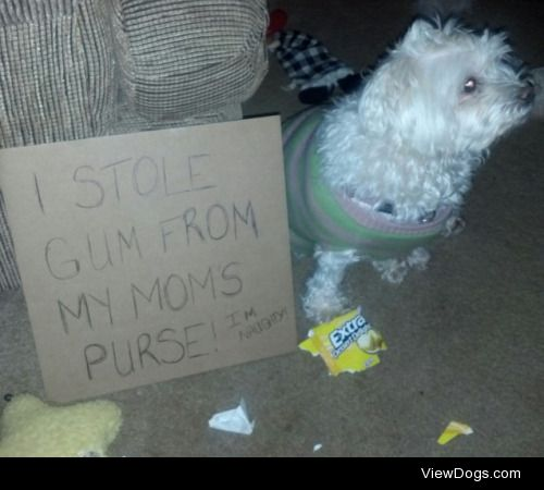 "Bella, the Gum Stealer  ""I stole gum from my mom's purse!…"