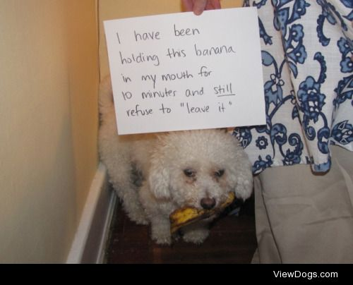 The Great BananaShowdown  Our dog trainer taught us that…