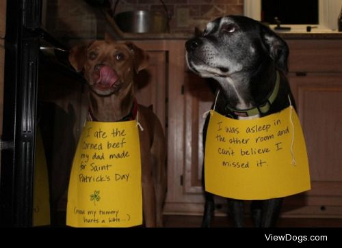 """Not-So-Dynamic Duo  Oakley: """"I ate the corned beef my dad…"""